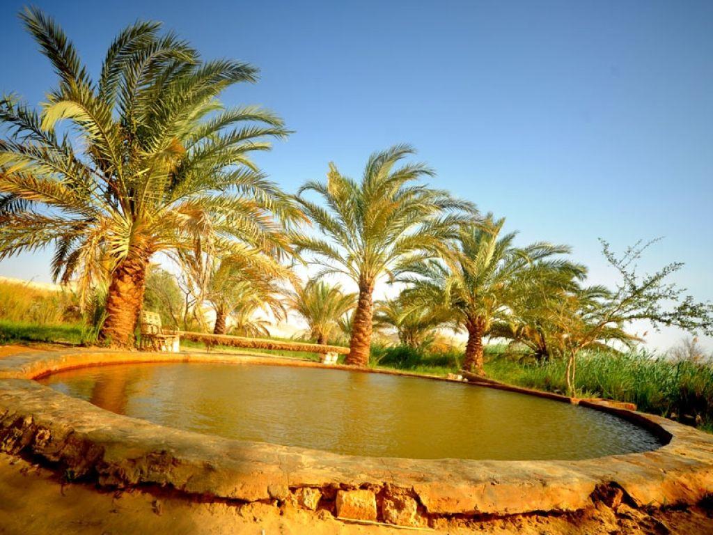 Oasis Siwa