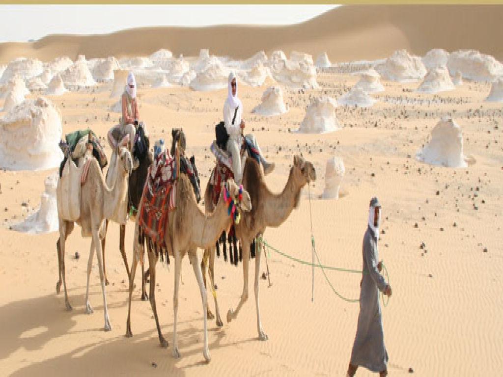 Pyramids, Nile Cruise and Oasis Desert